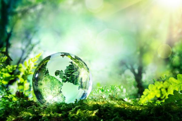 Formula E - My Green Life